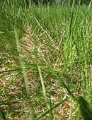 Rasenpflege - Tipps zu Pflege, Düngung und Schnitt des Rasens