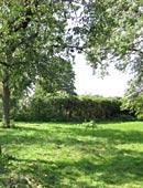 Der Garten in seiner Planung
