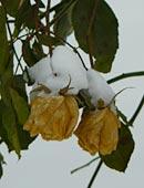 Winterblüher