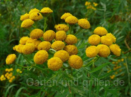 Foto: Gelbe Blumen auf grüner Wiese